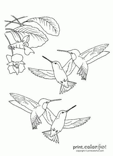 17 best images about hummingbird doodles on pinterest
