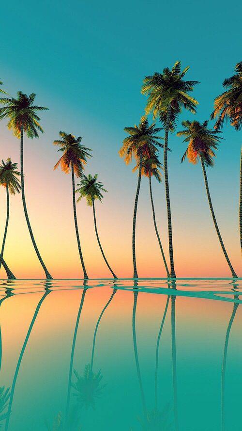 柔らかい太陽の光が包み込むフロリダ州のパームビーチの見所