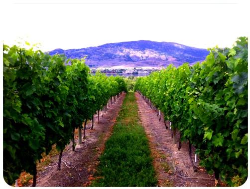 BC Winery at Osoyoos