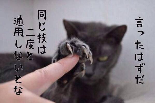 Pinterestより クールな猫ちゃんのクールな一言 #Pinterest #cat