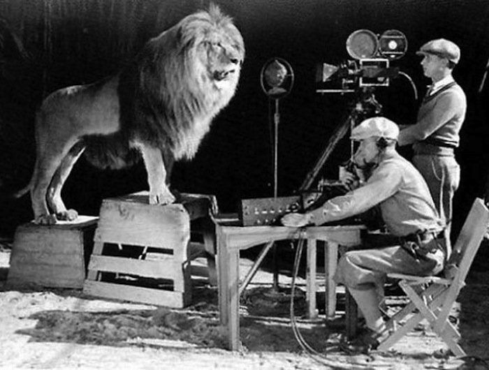 Metro-Goldwyn-Mayer's mascot, just before his roar is captured for the MGM logo.