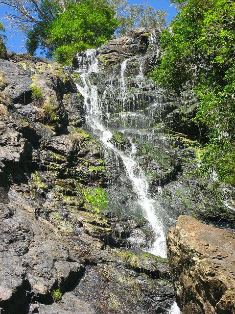 Kondalilla National Park, Brisbane, Australia