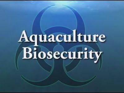 Shrimp Farming: IMPORTANCE OF BIO SECURITY