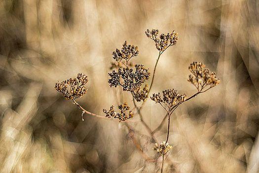 Dry plant by Katarzyna Szymanska