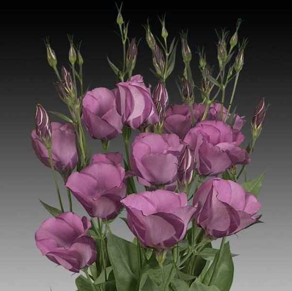 Цветы для букеты как выглядят и их названия