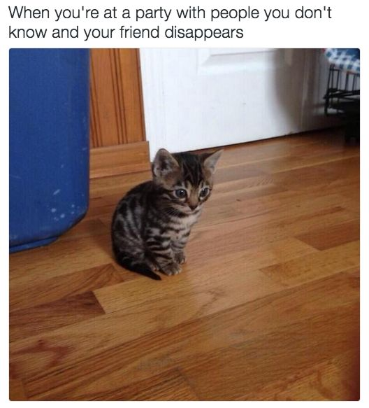 18 Cat Memes Literally Everyone Will Relate To