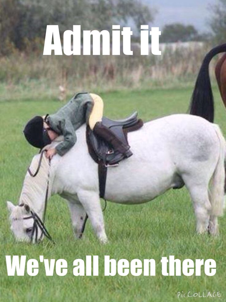 One time my horse was trotting and she bent her head down to get a fly off her leg and I fell overboard off her back and got the wind nocked out of me! Lol