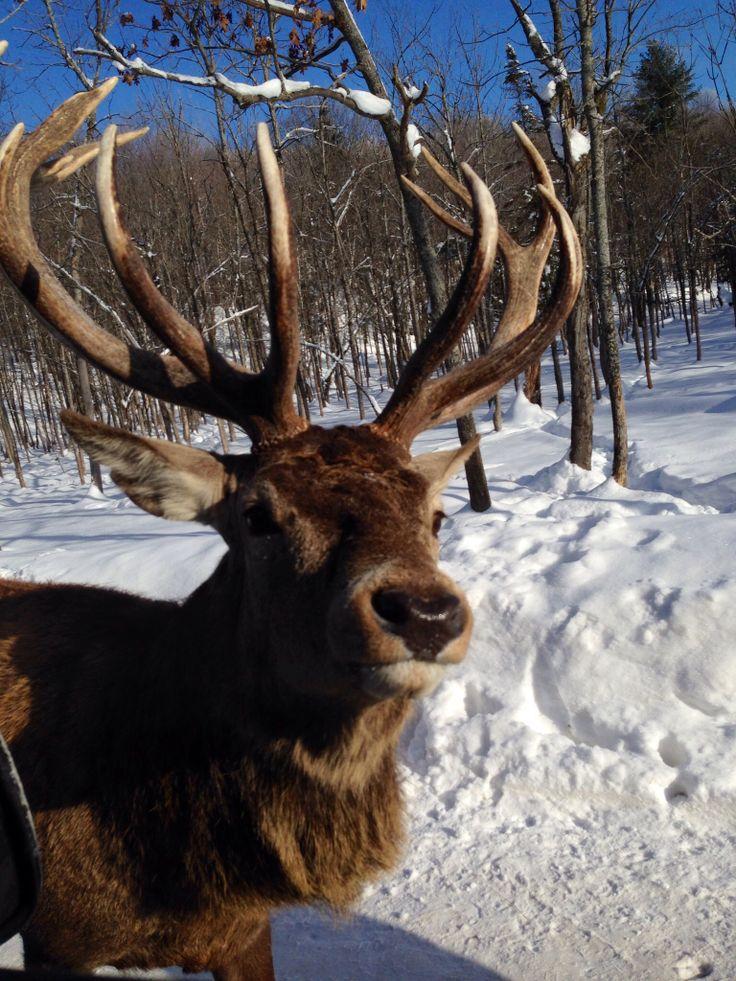 I think it's a deer!