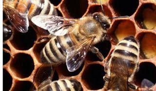 ΕΝ ΜΕΛΙΤΙ: Τι πρέπει να κάνετε όταν σας τσιμπήσει μέλισσα ή σφίγκα