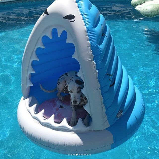 21 Dogs Doin Themselves A Pool Float Cutesypooh Inflatable Pool Float Ideas Of Inflatable Pool Float Inflat In 2020 Dog Pool Floats Animal Pool Floats Dog Pool