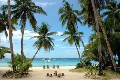 love the coconut trees......