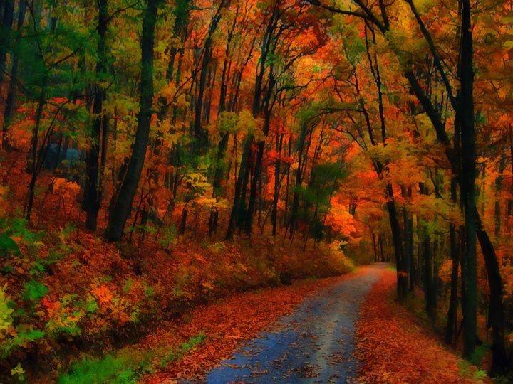 The beautiful forest of Foloi, Ileia, Greece #outdoorsgr