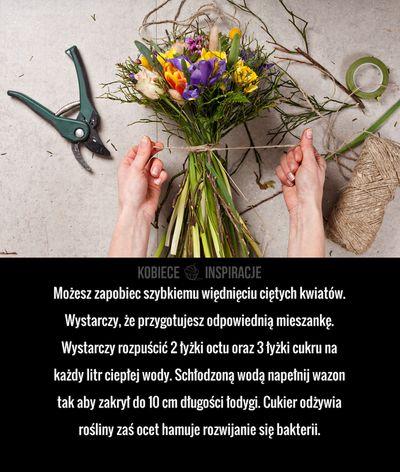 Możesz zapobiec szybkiemu więdnięciu ciętych kwiatów. Wystarczy, że przygotujesz odpowiednią mieszankę. Wystarczy rozpuścić 2 łyżki octu oraz 3 łyżki cukru ...