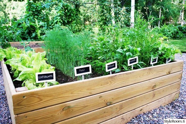 hyötypuutarha,trädgård,plantage,kasvimaa,kasvilava