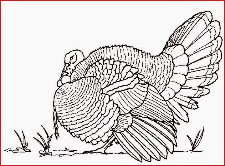 25 Best Turkey Coloring Pages Ideas On Pinterest Colors