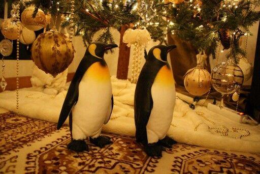 Happy penguins....