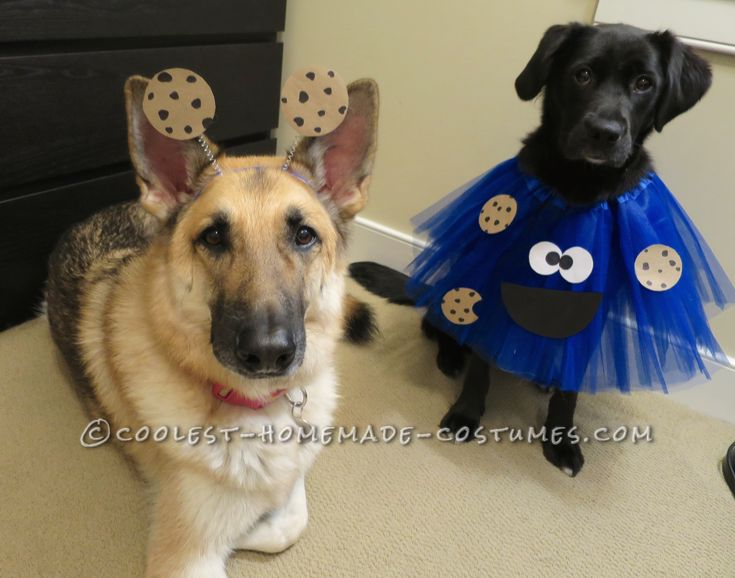 deliciously adorable cookie monster costumes for dogs - Dog Halloween Ideas