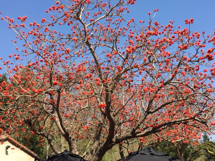 Red flower tree..