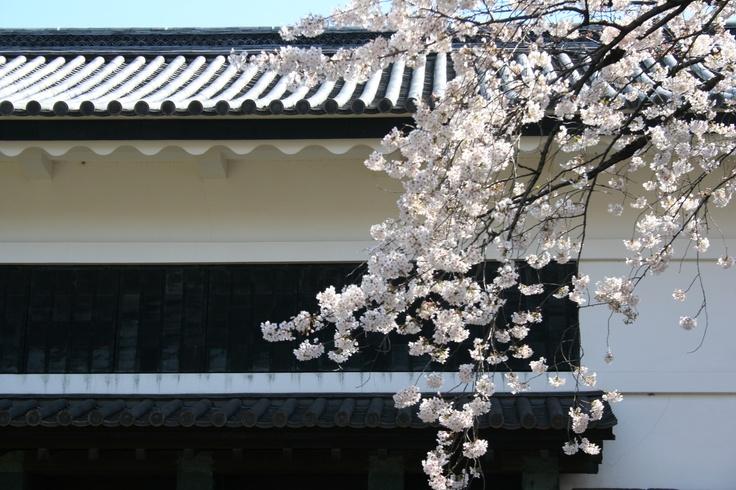 Old Japanese Style gate and Sakura