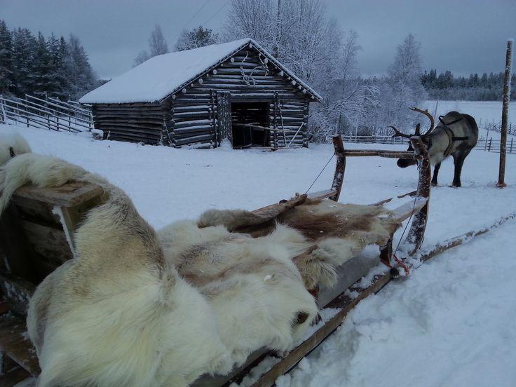 Sierijärvi reindeer farm Rovaniemi