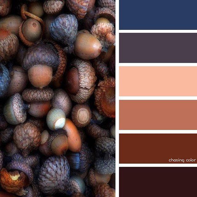 Коричневый цвет и его оттенки в картинках