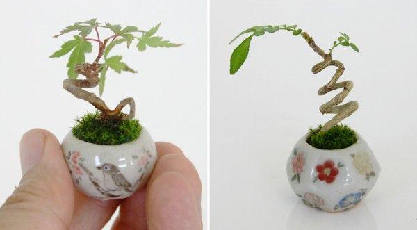 Miniature bonsai 8