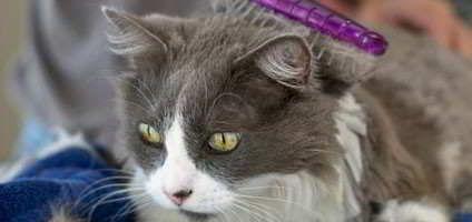 Foto Kucing Lucu Setelah Mandi