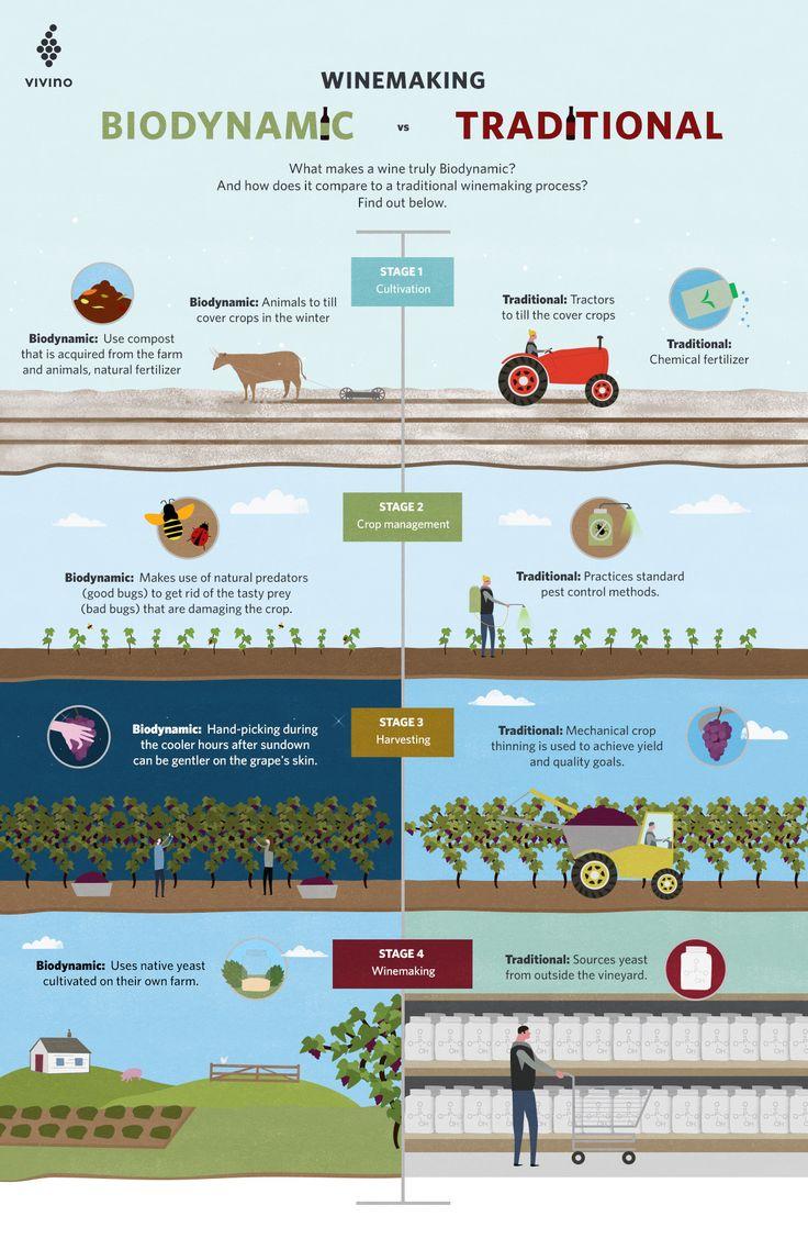 Biodynamic vs traditional winemaking