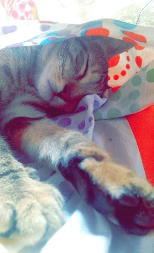 Me escondí y me dormí!