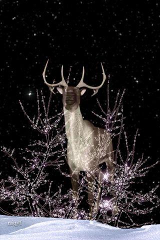 RUMA♥ CREADO -> В зимнем лесу