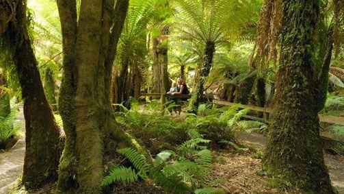 Tarra-Bulga National Park, Gippsland, Victoria, Australia.