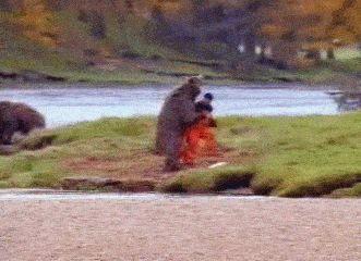 guy fights bear