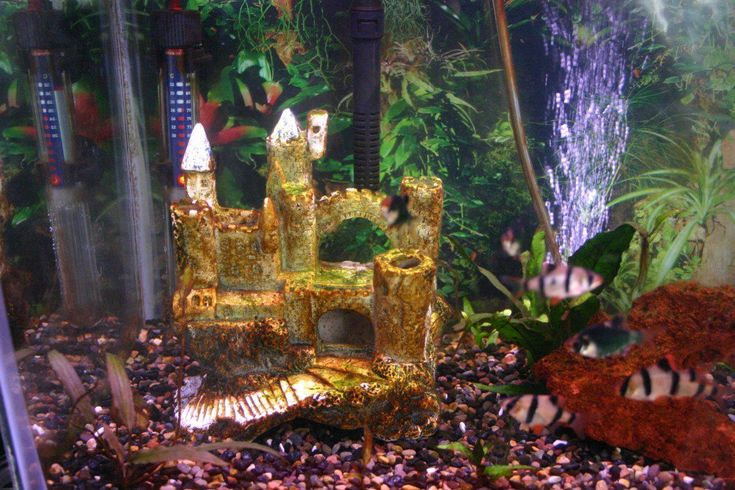 how to get rid of white algae in fish tank