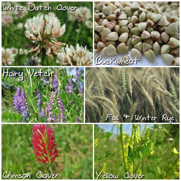 8 Best Fall Gardening Images On Pinterest Plants Vegetable Garden And Vegetables Garden