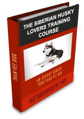 Siberian Husky Training: Learn All About Training Siberian Huskies & Taking Care of Them