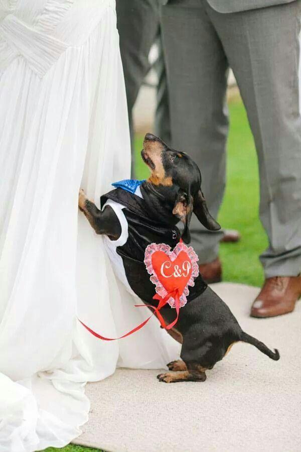 Utt Ohh....Weinder dog in the wedding.
