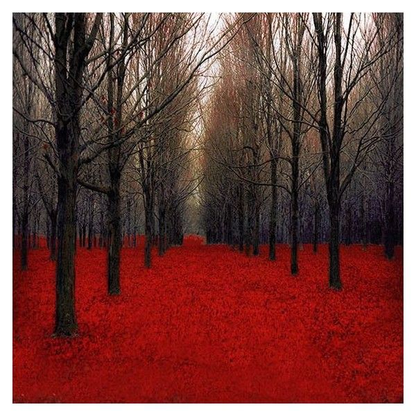 Large Canvas Art, Red Forest, Rustic Fall Decor, Black, Red, Wall Art... ❤ liked on Polyvore featuring home, home decor, wall art, forest wall art, canvas wall art, rustic home accessories, black wall art and red home accessories