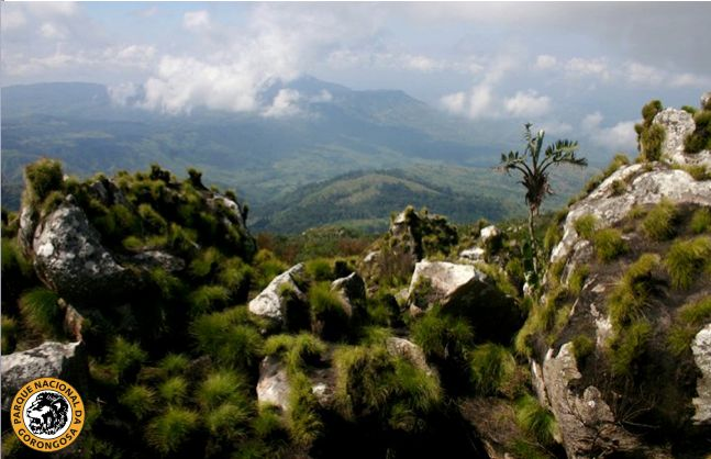 The beautiful view from Nhandore peak on Mount Gorongosa, Mozambique, in the middle of the day. Thanks to Bart Wursten for this great shot! http://on.fb.me/14CnhJF