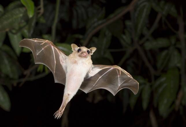 Bats are crucial to diverse ecosystems across the globe, yet they are often vilified or feared. Let's take a moment to appreciate the adorable side of these little critters.