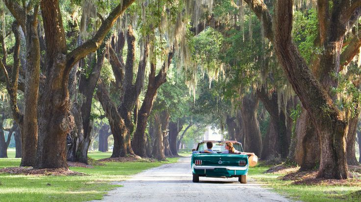 Between Savannah and Charleston lies a stretch of land lined with oak trees, pristine coastline, and all the barbecue and fresh seafood you can eat