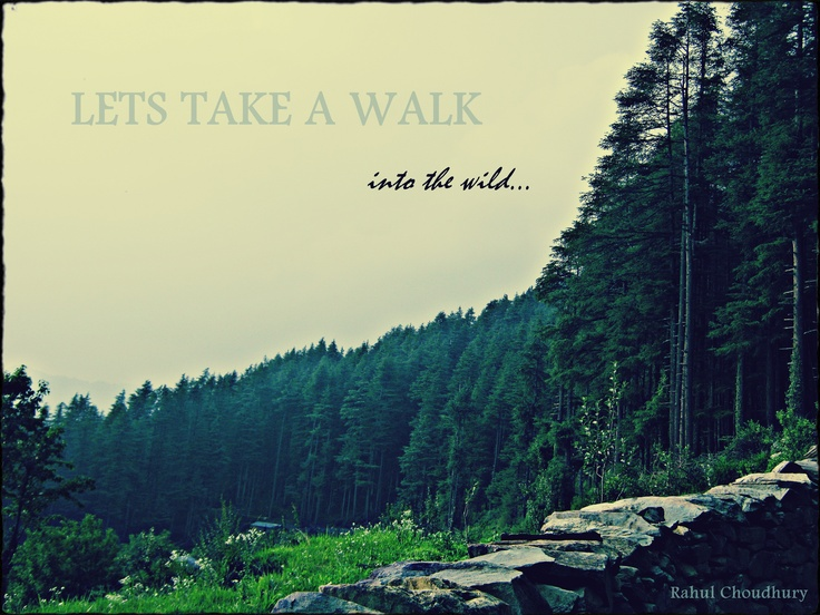 #India #Homestay #Forest www.Indiaoffbeat.com
