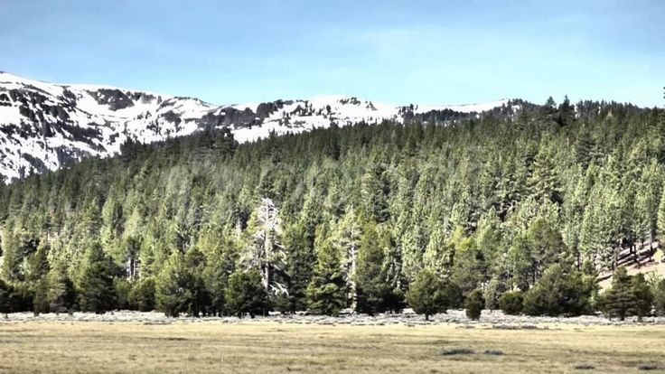 Snowy Mountains, Forest Meadow - Stock Footage | by Iam2012escapee