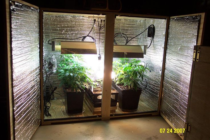 Growing Weed Is Actually Pretty Easy And Anyone With A Few