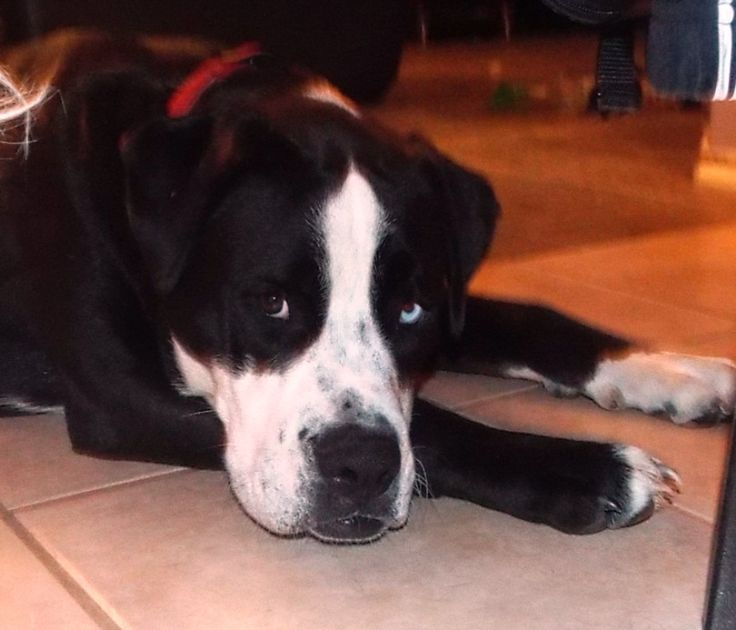Dog Rescue Olivette Mo