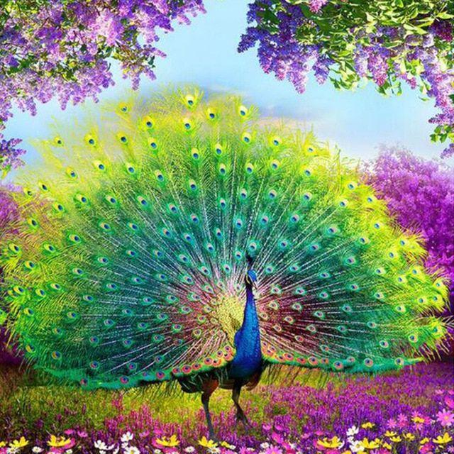 55 Gambar Mewarnai Hewan Burung Merak HD Terbaik