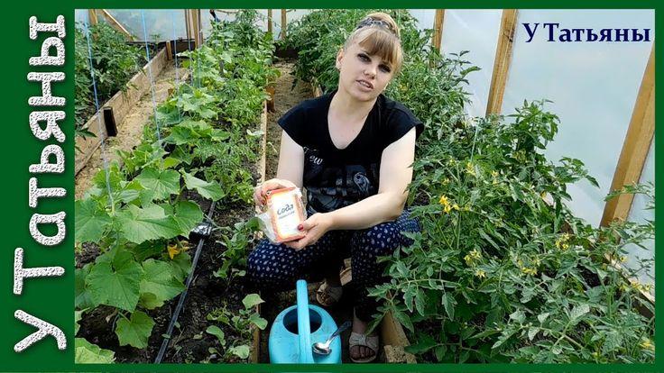 СОДА - спасатель вашего огорода! Пищевая сода - подкормка для: огурцов, ...