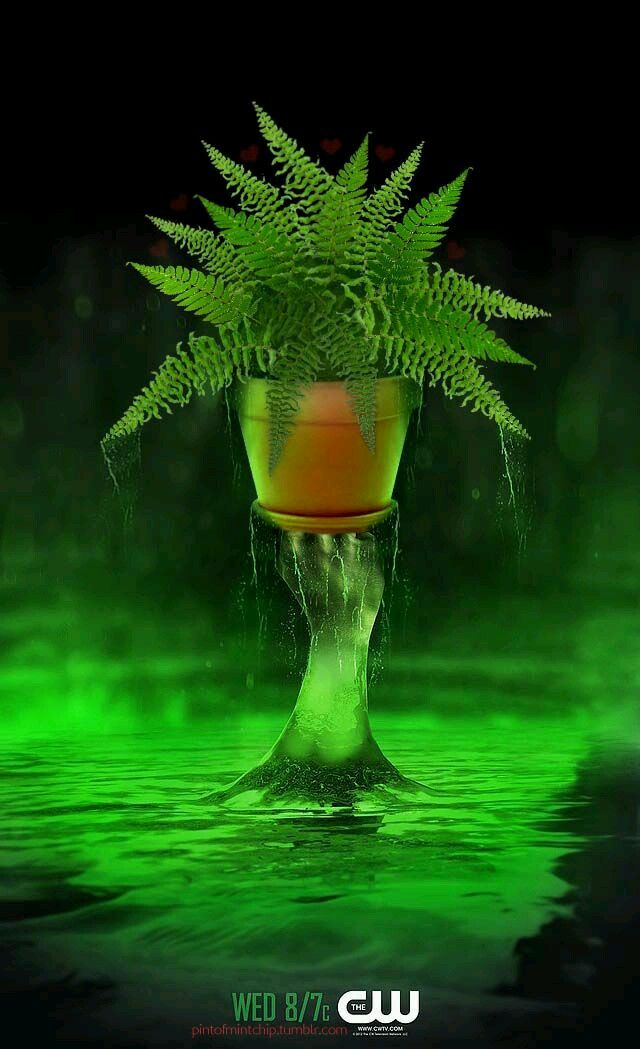 Get the Love Fern to the Lazarus pit NOW! #Arrow #Olicity