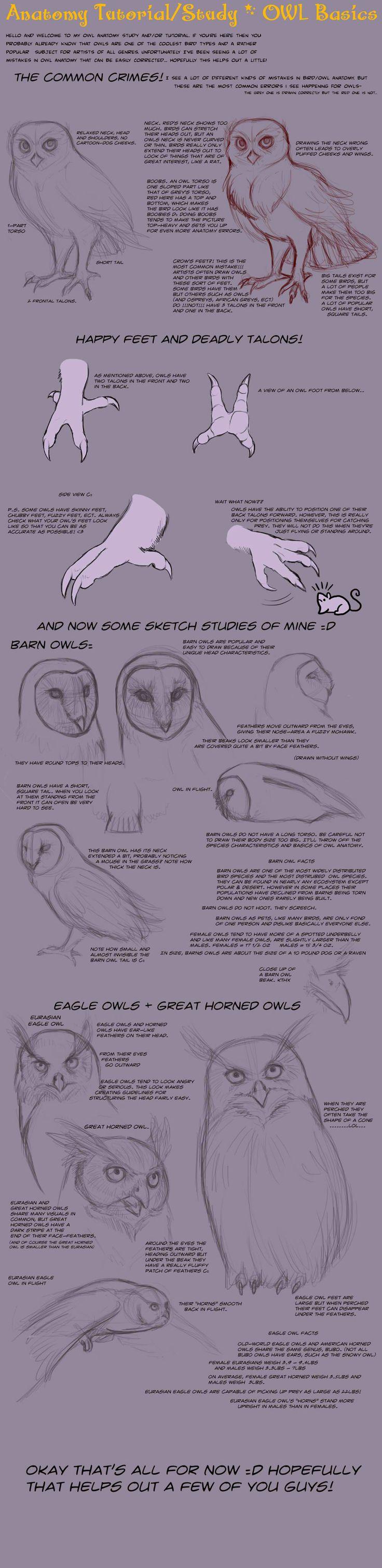 鳥の描き方」のおすすめアイデア 25 件以上 | pinterest | 動物の描き