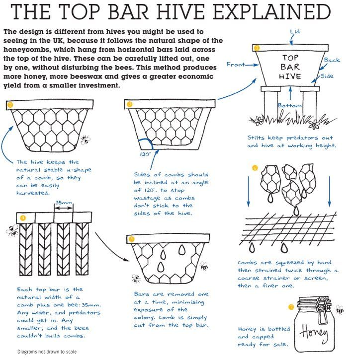 how to build a top bar beehive