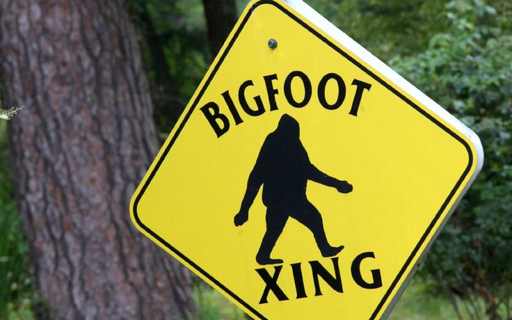 Is Bigfoot Real? Believers Present Video, DNA Evidence of Sasquatch